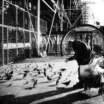 Feeding the birds © Annie Mallégol